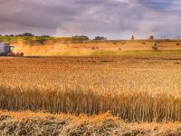 Buğday alım fiyatları belli oldu