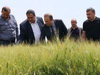 Ekili arazilerde süneyle mücadele çalışmaları başladı