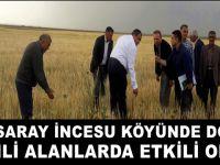 Aksaray İncesu'da dolu ekili alanlarda etkili oldu