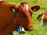 Süt ürecilerine destek müjdesi