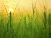 AK Parti'nin tarım ve hayvancılık vaatleri