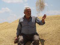 Tahıl ambarı Konya Ovası'nda arpa hasadı başladı