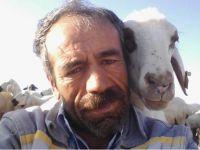 Koyunla çobanın ilginç dostluğu