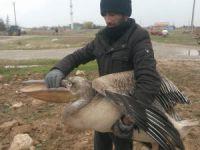 Pelikan o köyün maskotu oldu!