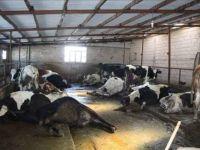 Eskil'de ahırda elektrik kaçağında bir kişi yaralandı, 5 inek telef oldu