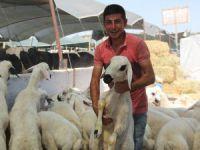 Konya'da kurbanlıklar alıcılarını bekliyor
