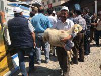 Derbent'te küçükbaş hayvan desteği