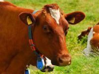 Hayvancılıkta yem krizi...