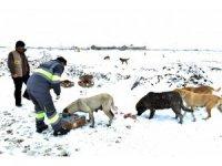 Konya Büyükşehir sahipsiz ve doğal hayattaki hayvanlara yem bıraktı