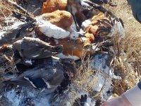 Aksaray'da kaçak avlanan avcılara 20 Bin TL ceza