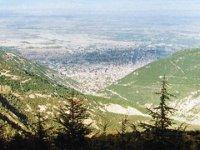 """Konya'da 3 kardeşin büyük azmi: """"Çorak tepeleri orman yaptılar"""""""