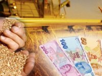 Dane mısır, hububat ve yem destekleme ödemeleri başladı!