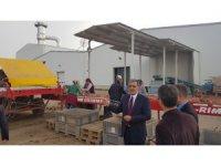 Konya Şeker bir tesis yaptı Konya'da patates üretimi 3'e katlandı