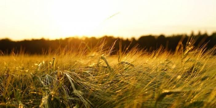 Gübre, Tohum ve İlaçta da tanzim satış olacak!