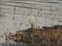 Göl ve sulak alanlarda 131 bin 686 su kuşu sayıldı