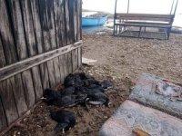 Sakar meke kuşu avına 22 bin 266 lira ceza