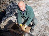 Hasta tilki koruma altına alındı