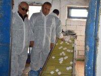 Yumurta üretim tesisine ziyaret