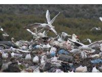 Kuş sürüleri ve sokak hayvanlarının çöplüğü mesken tuttu