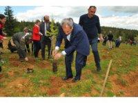 Başkan Akkaya, fidan dikim programına katıldı
