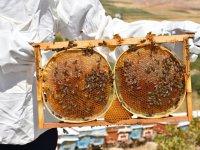 Arıların Mucizeleri
