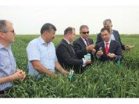 Konya'da doğaya faydalı 850 bin böcek bırakıldı