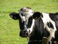 Şubat ve Mart Ayları Çiğ Süt Destek Ödemeleri Başlıyor