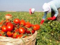 Bitkisel üretimin bir önceki yıla göre artacağı tahmin ediliyor