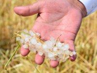 Dolu Aksaray'da ekinlere büyük zarar verdi