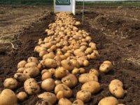 Yerli ve milli patates Nahita'da hasat başladı