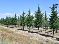 Aksaray Belediyesi yeşil alanlardaki çalışmalarına devam ediyor