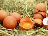 Yumurta üreticilerine 90 gün vadeli mısır satışı yapılacak