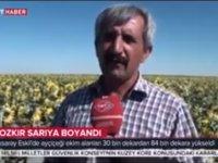 Eskil ayçiçek tarlaları TRT Haber'de VİDEO