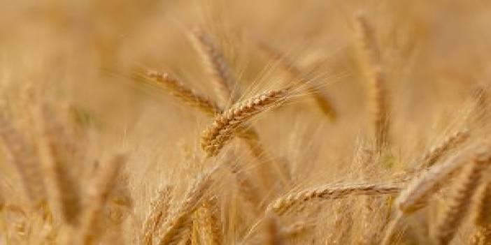 Tarım- ÜFE Haziran ayında %2,97 azaldı