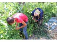 Ürünleri bahçeden toplayarak satın alıyorlar