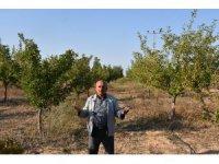 Eskil'de Yeraltı Su Kaynaklarının Çekilmesi Ağaçların Kurumasını Neden Oluyor