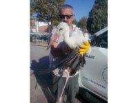 Yaralı olduğu için göç edemeyen leylek koruma altına alındı