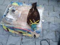 Cihanbeyli'de gözü kapatılan şahin, güvercin ve tuzaklı ava 20 bin lira ceza