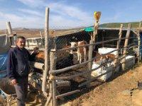 Hüyük'te  orman köylüsü 62 aileye 124 gebe düve desteği