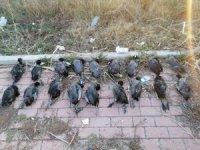 Konya'da sakarmeke avcısına 13 bin 526 lira ceza