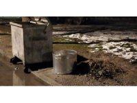 Meram'a bin adet daha kül kovası yerleştirildi