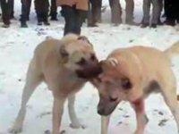 Konya'da ormanda köpek dövüştüren ve bahis oynayan 17 kişiye para cezası