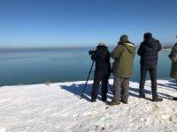 Beyşehir Gölü Milli Parkı'ndaki kuş varlığı ortaya çıkarılıyor