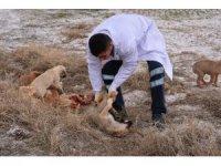 Eskil'de ölüme terk edilen köpeklere Aksaray Belediyesi sahip çıktı