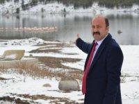 Konya'da 13 flamingo soğuktan öldü