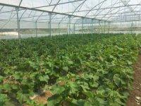 Beyşehir'de çiftçilere sera desteği imkanı