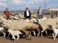 Aksaray'da tarımsal ve hayvansal üretim tüm hızıyla devam ediyor