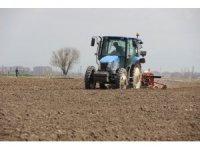 Çiftçiler tarlada havuç ekimi mesaisine başladı