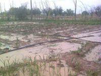 Eskil önümüzdeki 5 gün yağışlı