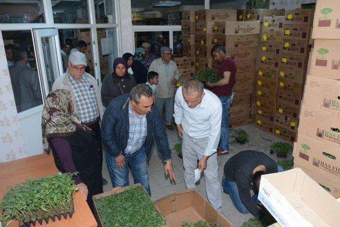 Aksaray'da çiftçilere 700 bin adet sebze fidesi dağıtıldı